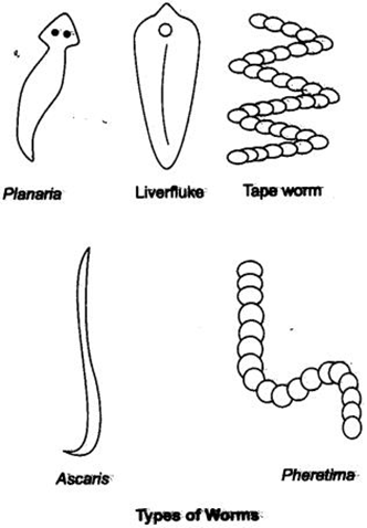 Extra Questions for Class 9 Science Chapter 7 Diversity in Living Organisms 3
