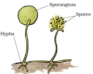 Extra Questions for Class 7 Science Chapter 12 Reproduction in Plants image 4