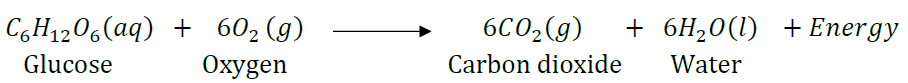 NCERT Solutions for Class 10 Science Chapter 1 Chemical Reactions and Equations image 14