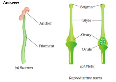 NCERT Solutions for Class 7 Science Chapter 12 Reproduction in Plants image 1