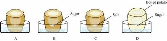 NCERT Solutions for Class 9 Science Chapter 5 The Fundamental Unit of Life part 1